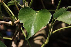 Liefde uit de natuur