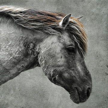 Konikpaard van Ricardo Bouman