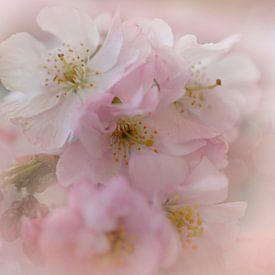 Bloesem van de Japanse kers van Truus Nijland