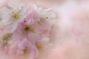 Blüte der japanischen Kirsche von Truus Nijland