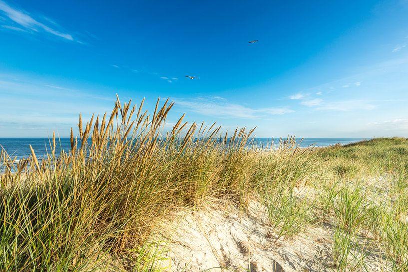 North Sea Dunes van Hannes Cmarits