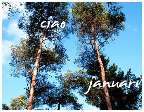 Januari Norg