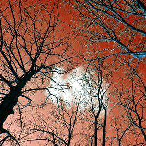 Meditative Power of the Trees