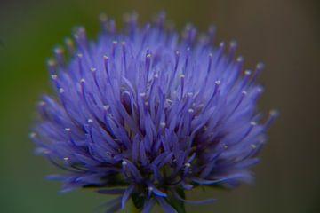 Close-up van een bloem met paars en blauwe kleuren