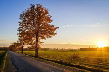Boom bij zonsondergang van Johan Vanbockryck