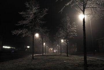 Frozen Trees van Gert Tijink