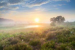 Lever de soleil à Kampina sur Ruud Engels