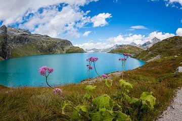 Bergblumen am Bergsee von Pieter Bezuijen