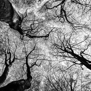 Boomtoppen in zwartwit von Floris van Woudenberg