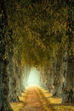 Märchenpfad im Nebel von Lars van de Goor
