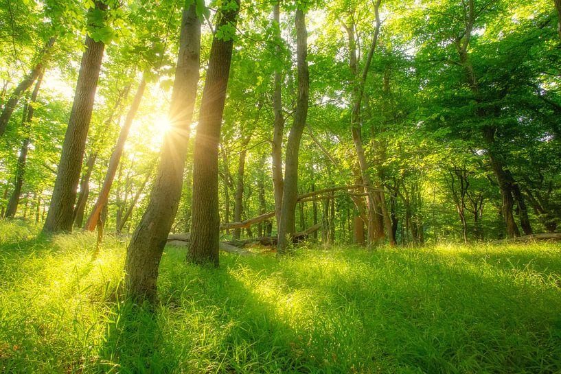 Grüner Sommer Sonnen Wald von Oliver Henze