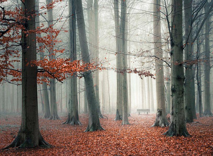 Bankje in mistig bos