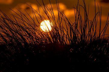 Dünengras im Sonnenuntergang van