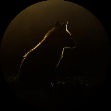 Backlight van Pim Leijen