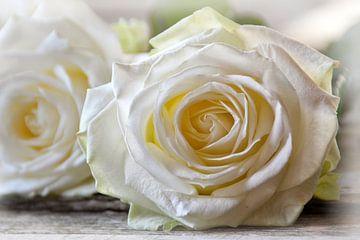 Weiße Rosen von Claudia Moeckel