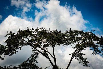 Vögel in einem tropischen Baum im Amazonasgebiet, Peru von John Ozguc