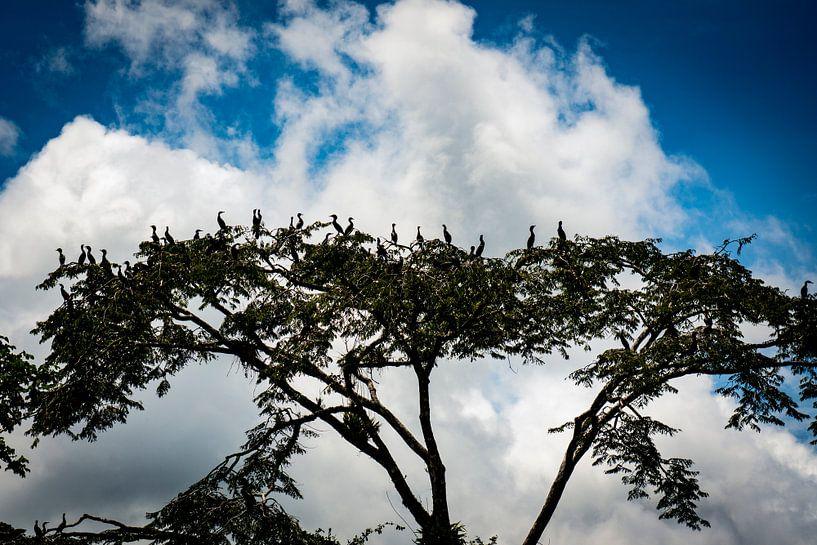 Vogels in een tropische boom in de Amazone, Iquitos, Peru van John Ozguc