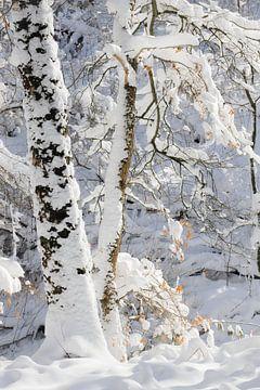 Boom met herfstblad in sneeuw van Michel Seelen