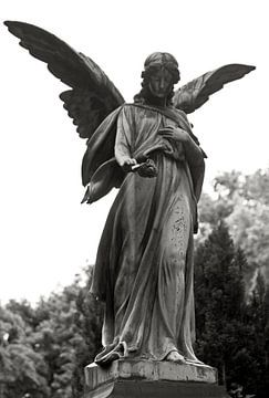Engel mit Rose von Silva Wischeropp