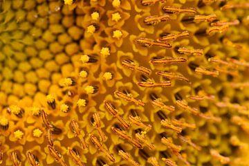 Sonnenblume von Ingeborg Schouten
