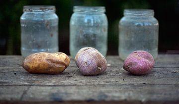 001-Pommes de terre sur Hay Hermans
