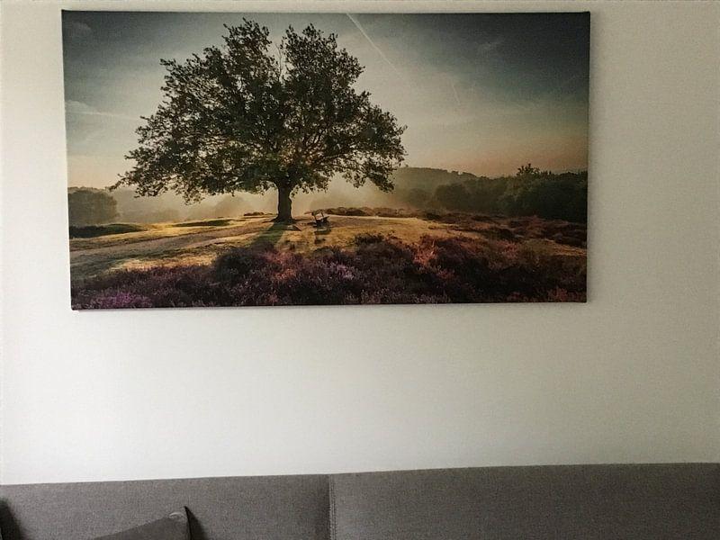Klantfoto: Stralende zon achter een boom op de paarse Mookerheide van Michel Seelen, op canvas