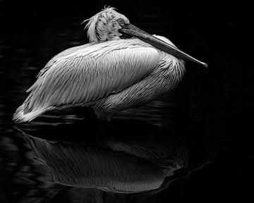 Pelikaan reflectie in het water van Patrick van Bakkum