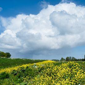 Westfries Landschap van Elly van Veen