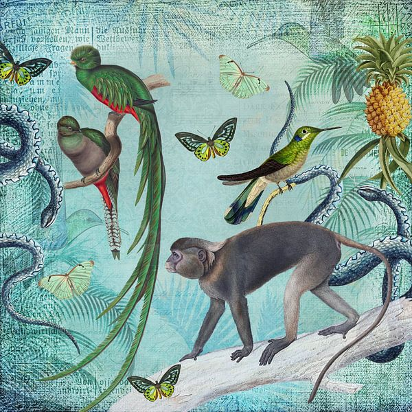 Dschungel Freunde von Andrea Haase