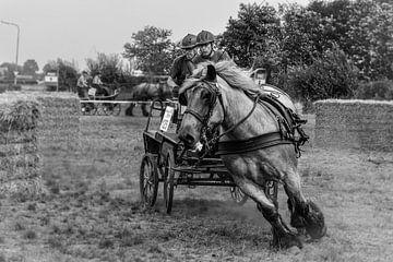 Horse drive sur Wessel Krul