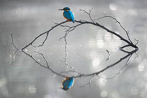 Reflectie van