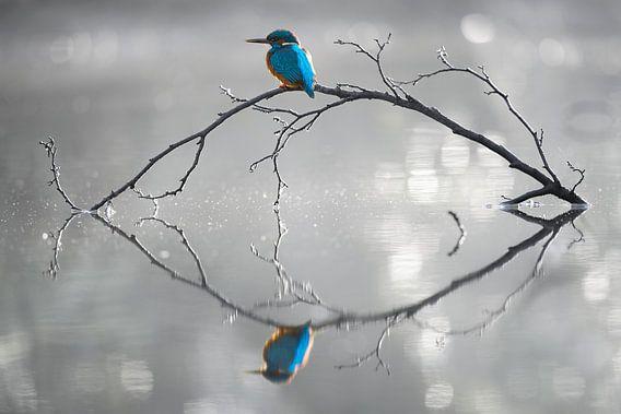 Reflectie van Corné van Oosterhout
