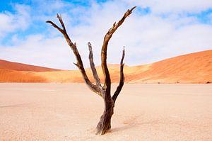 De dansende boom... van Aisja Aalbers