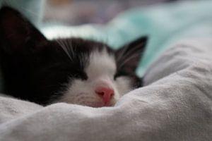 kat van caitlin huijsing