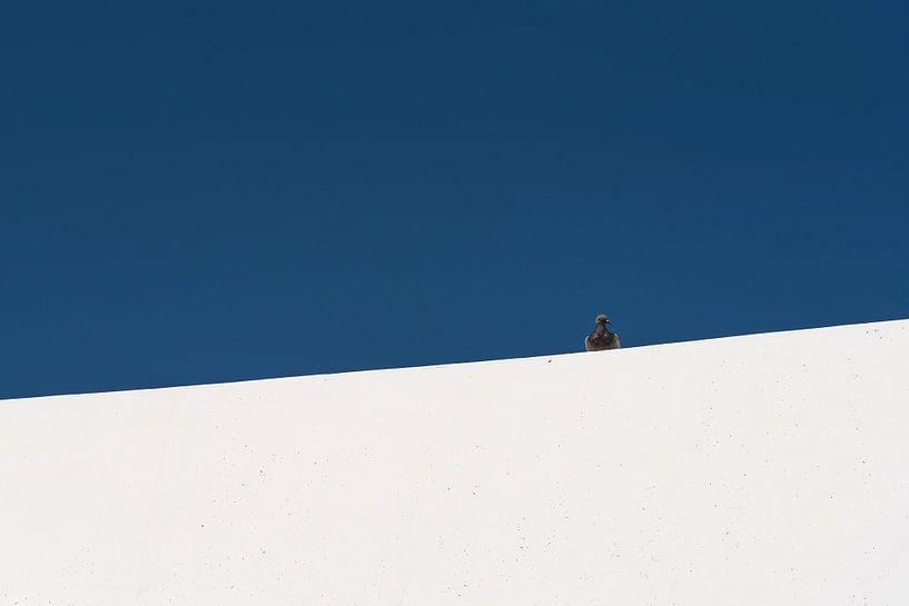 Duif op witte muur van Leon Doorn