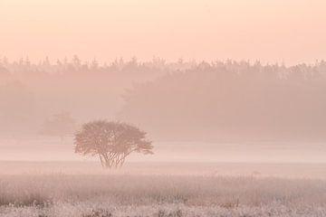 Nebelig und zuerst reif von Gonnie van de Schans