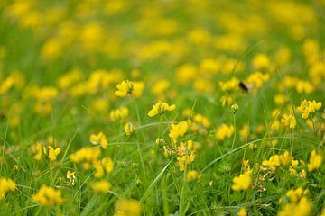 Frühlingsmolke von Theo van Woerden