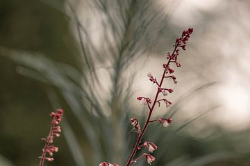 schaduw plant van Tania Perneel