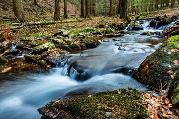 Natur Bäume Wasser Sonne von Johnny Flash