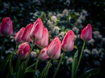 Tulpen in de lente van Anke de Haan