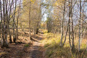 bos in herfstkleuren bij gildehaus von Compuinfoto .