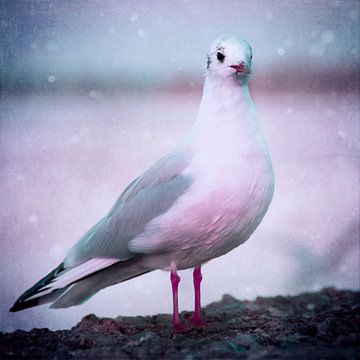 White seagull  sur INA FineArt