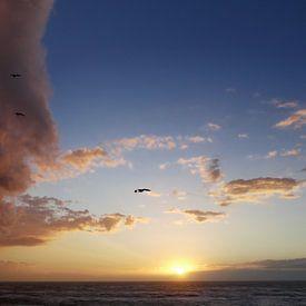 Jonathan Livingston Seagull vliegt een wolk in. van Hans Heemsbergen