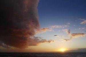 Jonathan Livingston Möwen fliegt in einer Wolke. von