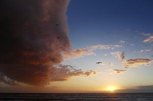 Jonathan Livingston Seagull vliegt een wolk in.