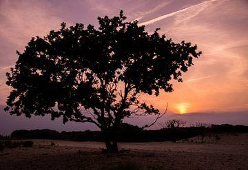 Zonsondergang in de duinen van Den Haag van Wouter Kouwenberg