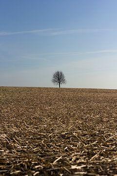 Eenzame boom van Arno Photo