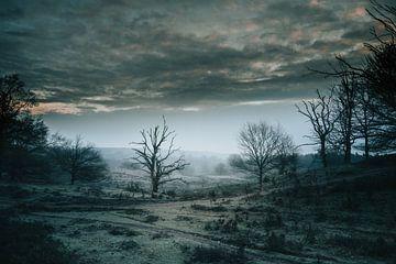 Der gefrorene Baum von shX.photography