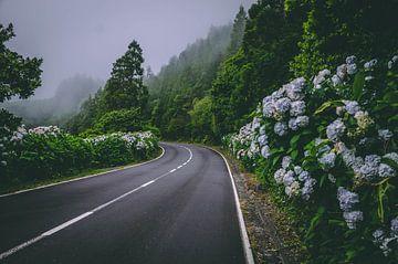 pico azores, Nebel, Blumen von Isai Meekers