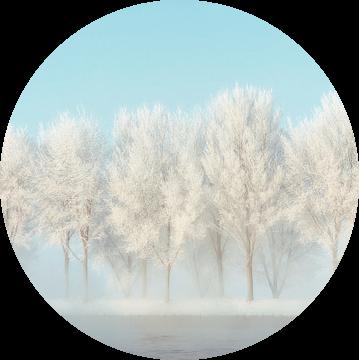 Frozen Lane van Lars van de Goor